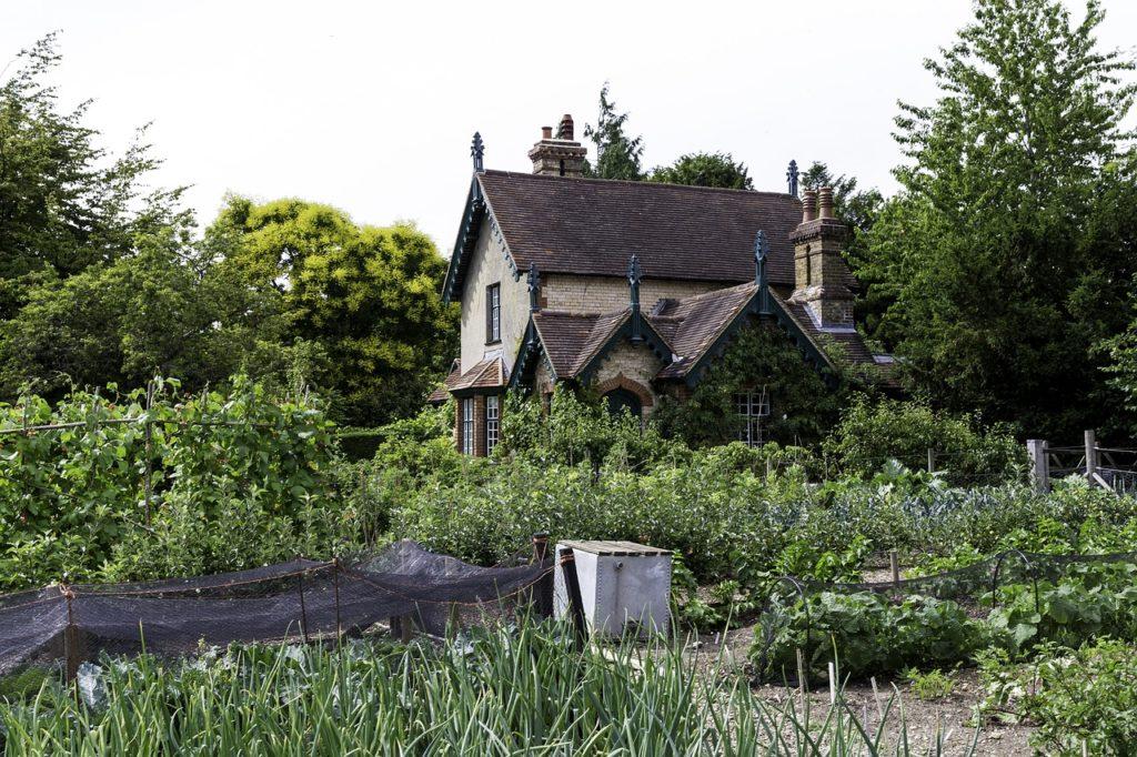 Ein Gemüse Garten