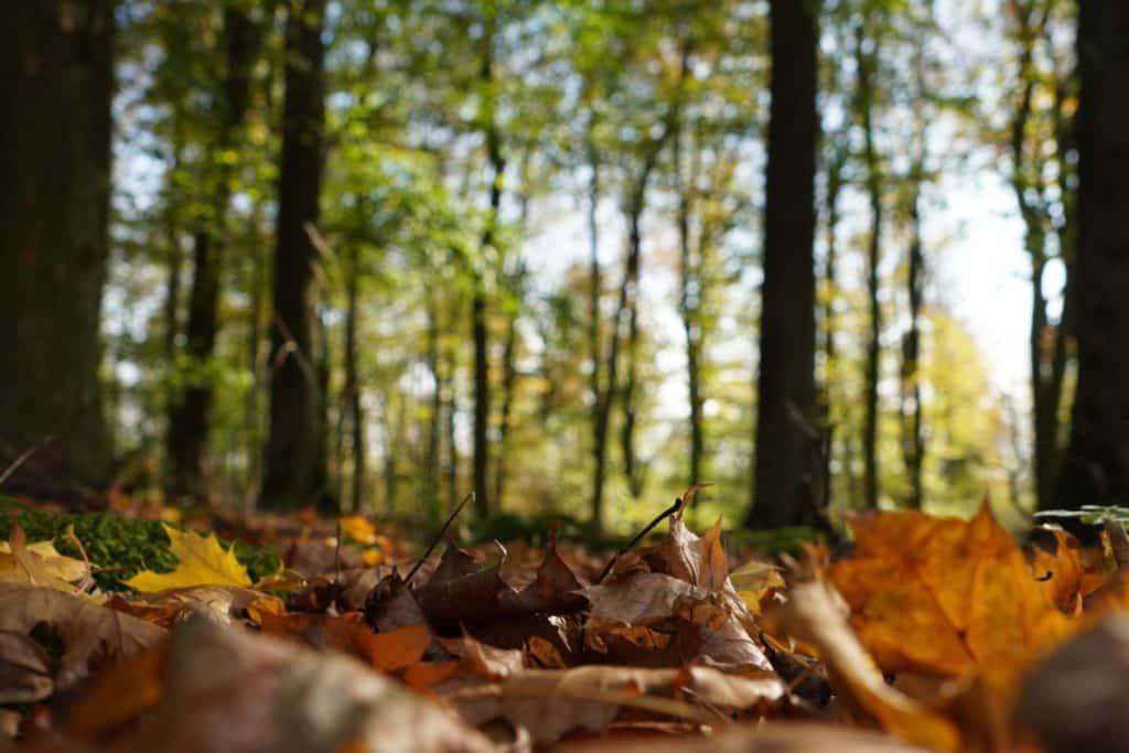 Entdecke den Wald