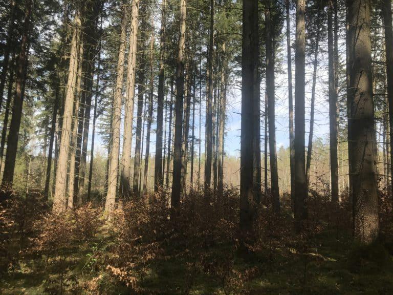 Forstenrieder Wald 1