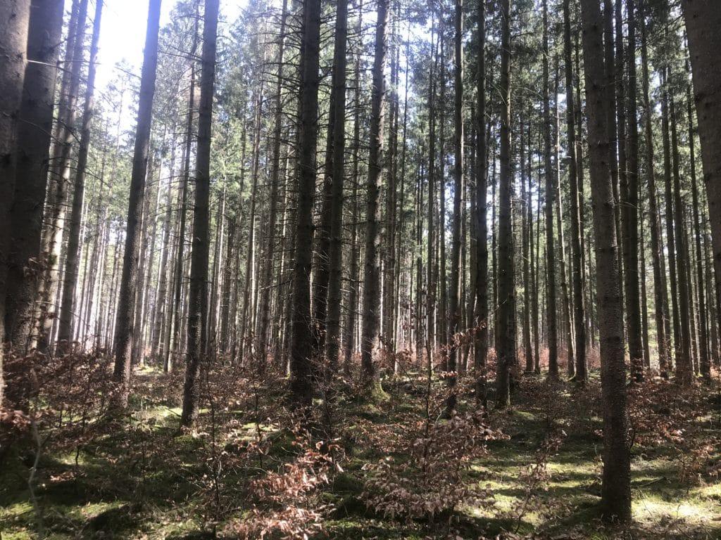 Forstenrieder Wald 2