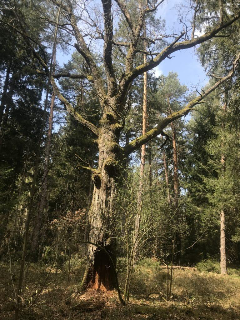 Forstenrieder Wald 3