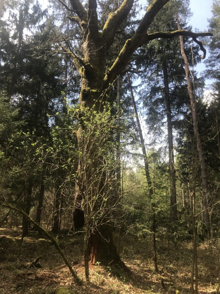 Forstenrieder Wald 4